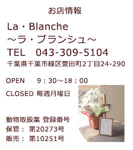 千葉県緑区にあるドッグサロン、ラブランシュのお店情報です